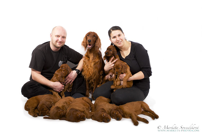 CONTACT - irish red setter kennel